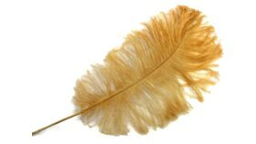 Image of a Antique Gold Feather