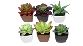 Image of a Artificial Plants - Potted Succulent Plants, 3.5x2.5x2.5 in.