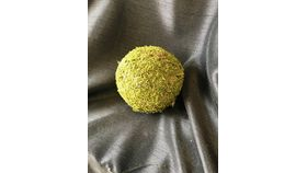 "Image of a 5"" Moss Ball"