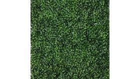Image of a Boxwood Wall