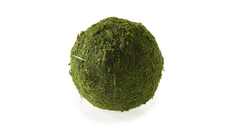 "Picture of a 10"" Moss Sphere"