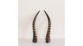 Image of a Blesbok Horns