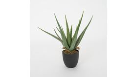"""Image of a 17"""" Potted Aloe"""