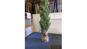 """Image of a Alaska Fir Tree 36"""""""