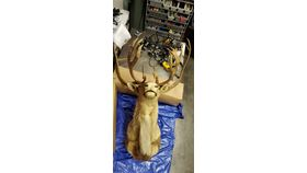 Image of a Caribou Wall Mount