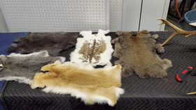Image of a Assorted Rabbit Hide
