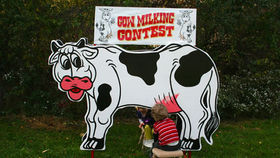 Image of a Cow Milking Contest