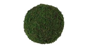 "Image of a 12"" Moss Ball"
