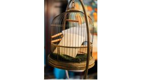 Image of a Bird Cage on Stand