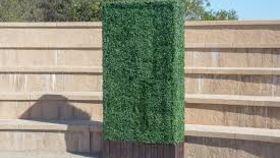 Image of a 6'x3.5' Boxwood Hedge