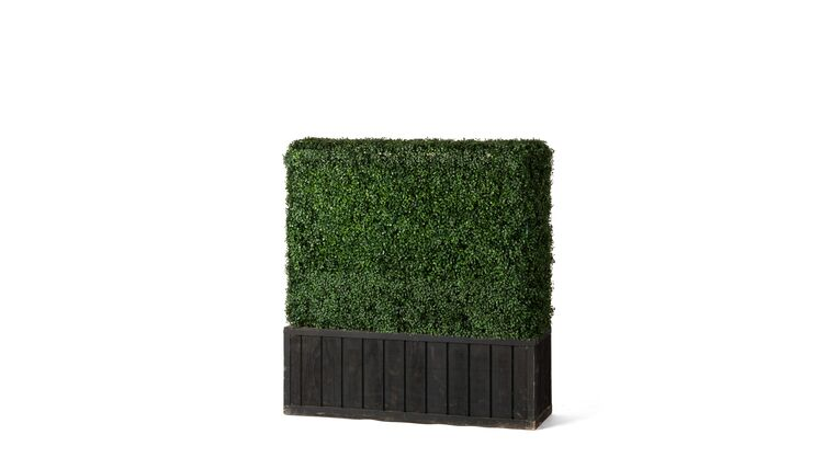 Picture of a 4'h x 4'w Boxwood Hedge With Planter