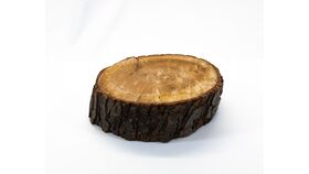 Image of a Log Slice - Thick