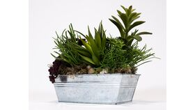 Image of a Succulents in Tin Box