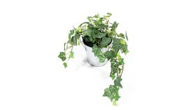 Image of a Potted Ivy