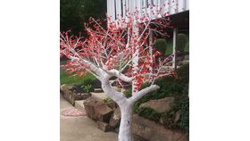 Image of a White Cherry Blossom Tree w/Red Lights on the flowers 8'H x 7'W