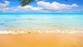 Image of a Beach Backdrop
