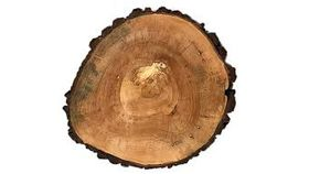 Image of a Tree Slab Wooden