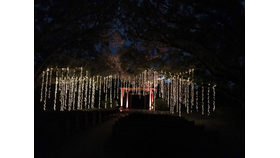 Image of a Hanging Tree Lights, White (Group of 10)