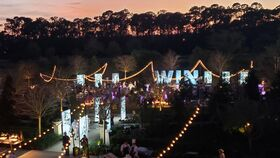 Image of a 4 Seasons - Lady Palm Lawn, Fairy Lights - Zigzag