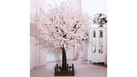 Image of a 10ft tall Cherry Blossom Tree