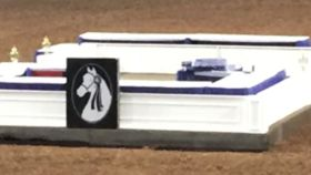 Image of a Morgan Horse Owned-White judges Box-Coliseum