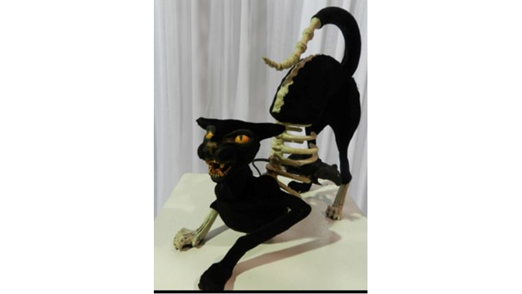Picture of a Cats-Skeleton