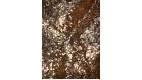 Image of a Drape Panel-Gold Sequin