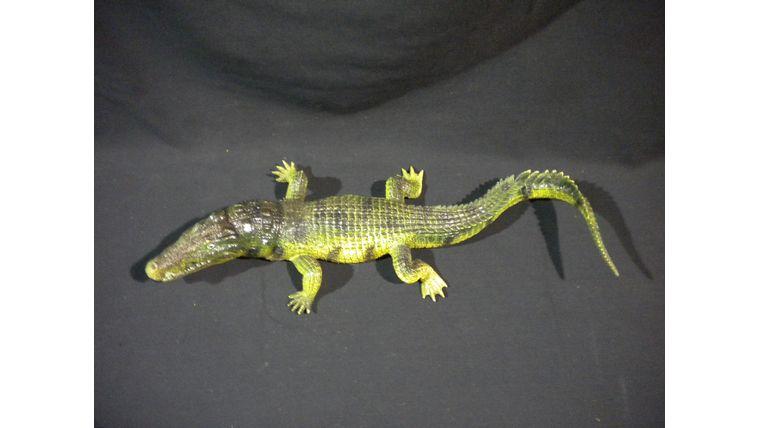 Picture of a Alligator-Plastic