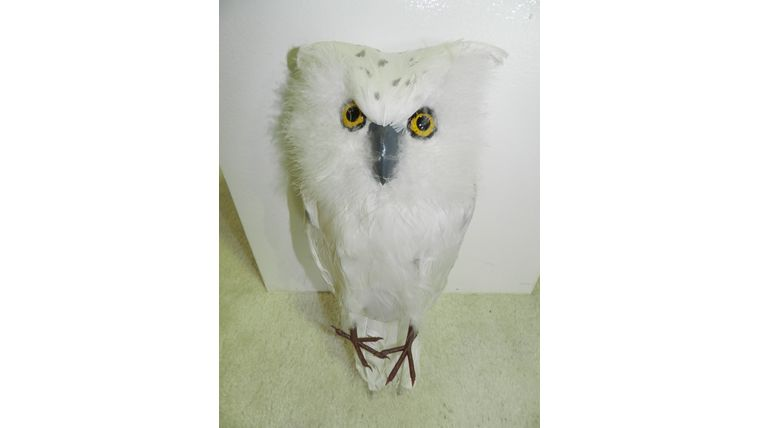 Picture of a Bird-White Owl