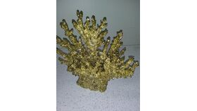 Image of a Gold Threshold Coral