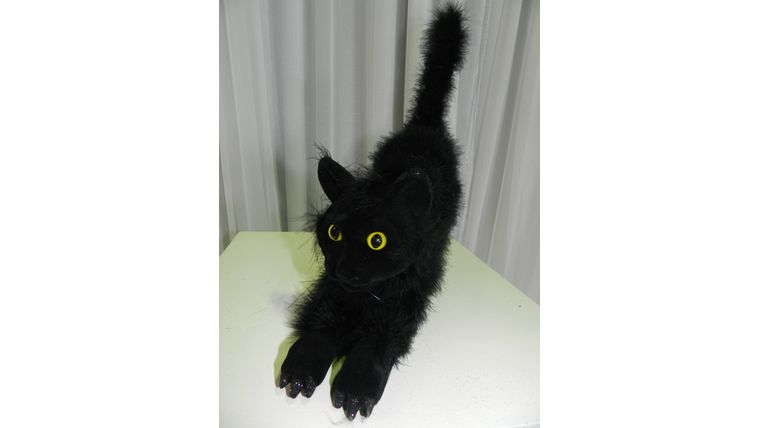 Picture of a Black Cats
