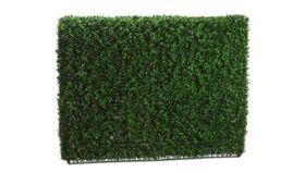 Image of a Boxwood Hedge