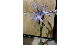 Image of a Lily-Purple