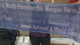 Image of a Morgan Horse Owned-Banner