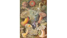 Image of a Sea Anemone Wooden Puzzle