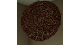 Image of a Grapevine Sphere Medium Scenic
