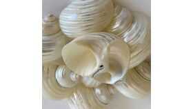 Image of a Pearl Shell Napkin Rings