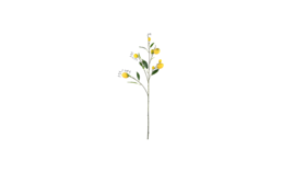 Image of a Almost Real Lemon Branch