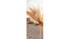 "Image of a 4"" Tall Pampas Grass"