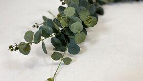 "Image of a 5.5"" Garland - Spiral Eucalyptus"