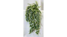 """Image of a 24"""" Spiral Eucalyptus Bush"""