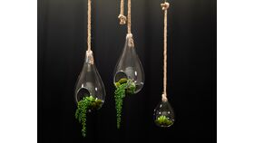 Image of a Hanging Terrariums with Rope Trio