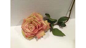 Image of a Dusty Pink and Yellow Rose