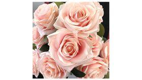 Image of a Blush Pink Rose