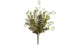 Image of a Eucalyptus berry Plant