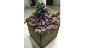Image of a Air Plants - Small - Assorted
