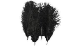 """Image of a 12"""" - 14"""" Black Ostrich Feather Rental"""