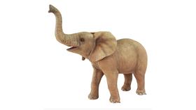 Image of a Baby Elephant