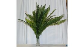 Image of a Boston Fern Plant on a Stick