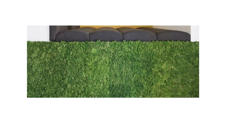 Picture of a 10'w x 2'd Half Wall / Rectangular Pedestal Elevation MOSS